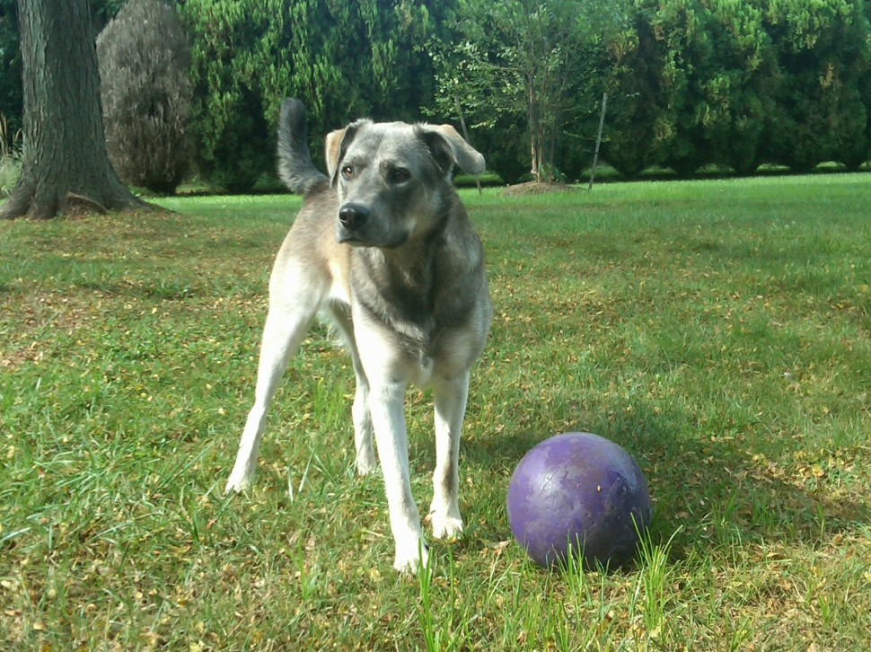 Galen and purple ball