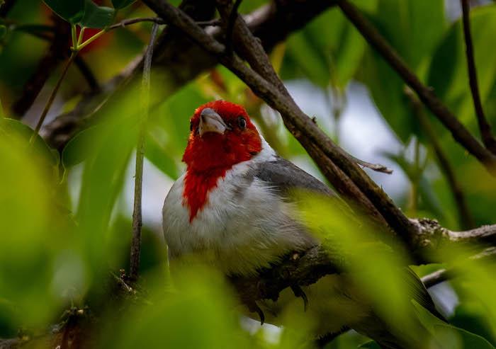 Birding in Buenos Aires