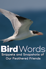 Bird Words: Snippets and Snapshots of Our Feathered Friends